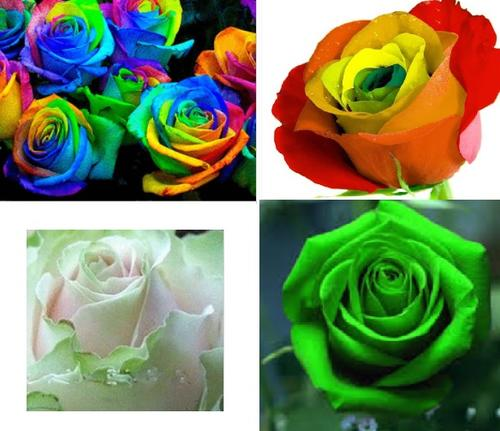 Rose seed special 10 seeds green 10 seeds multi for Growing rainbow roses from seeds